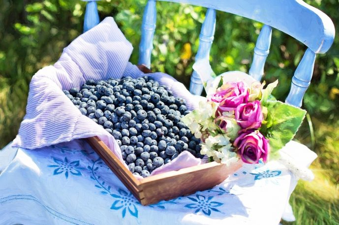 growing blueberries 7 quick facts