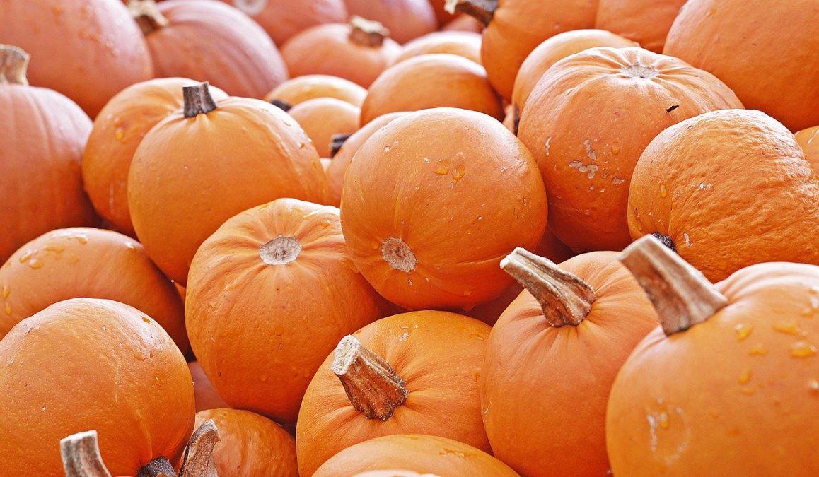 pumpkin, autumn, food