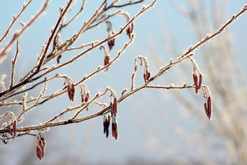 winter, branch, tree